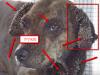 זהירות!! כלב עם 3000 קרציות שורד. 10 עובדות על קרציות (לא לבעלי לב חלש)
