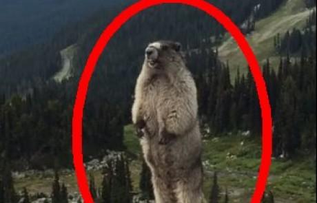 סרטון קורע מצחוק על החיה הכי מצחיקה בעולם – חובה לראות!