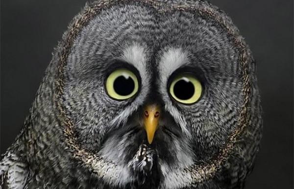 גלריה מדהימה של חיה אהובה – ינשוף