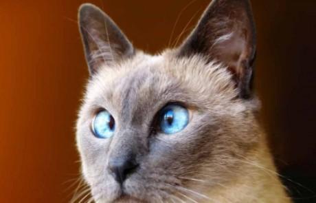 אין על חתולים. תודו שהם הכי מצחיקים בעולם. תתחילו לצחוק…
