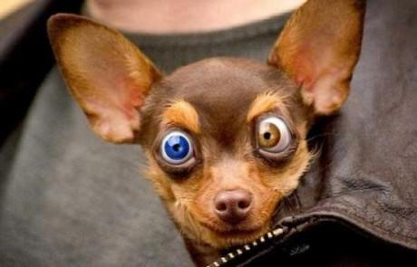 10 דקות של כלבים מצחיקים. קורע מצחוק!!!
