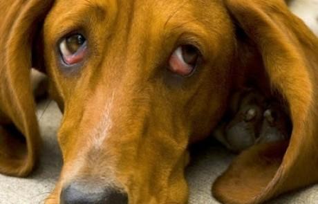 יש כלבים עם מלא בושה אבל ראיתם פעם כלב מתנצל מכל הלב? קורע לב…