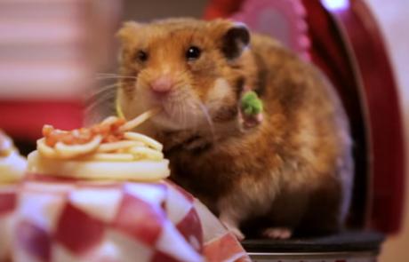 איש אחד הכין ארוחת שף גורמה לזוג האוגרים שלו. סרטון קצר ומדהים, הם כל כך חמודים!