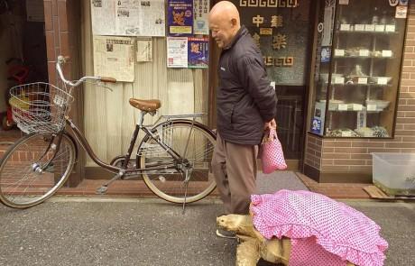 בחור מטייל עם צב חיית המחמד שלו ברחובות טוקיו