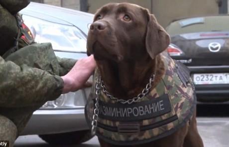 רוסיה חושפת את השריון שלה עבור כלבים הנלחמים בטרור – שווה או לא?