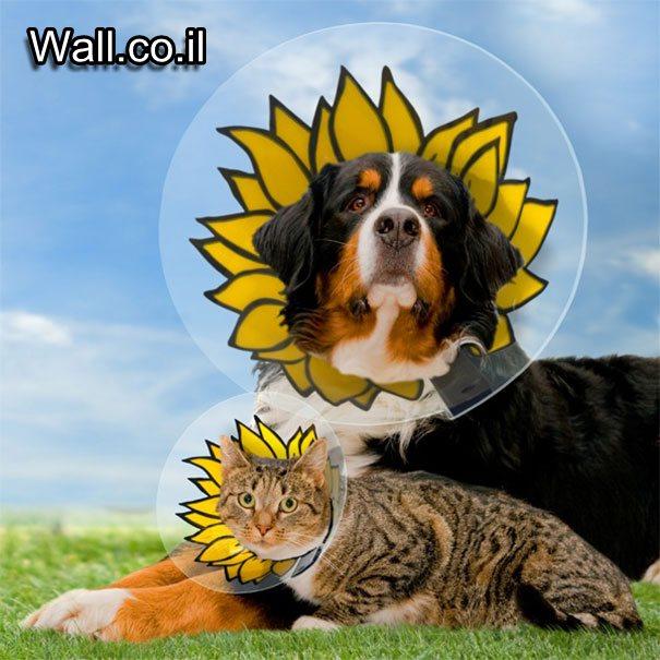 conos-impresionantes-mascotas-11
