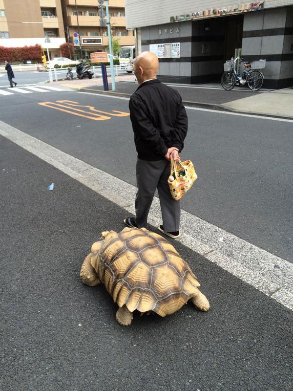 mitani-hisao-wakls-his-tortoise-around-tokyo-4