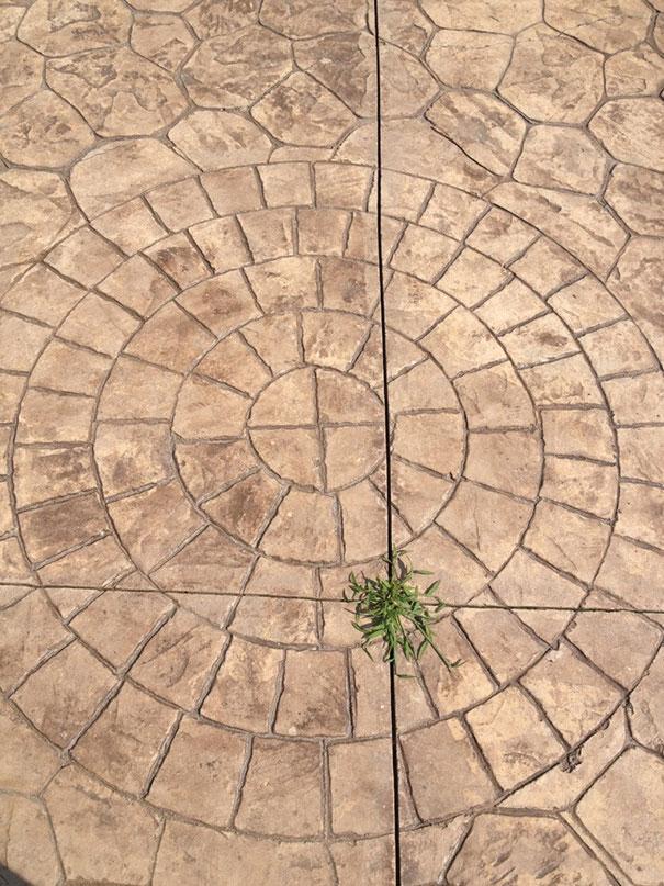 AD-Annoying-Photos-OCD-35
