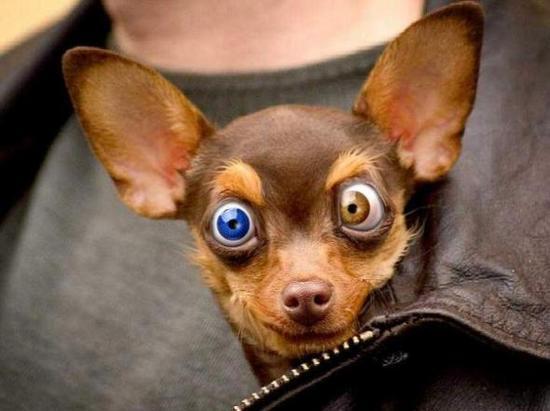 Cute-Funny-Dog-2012-12