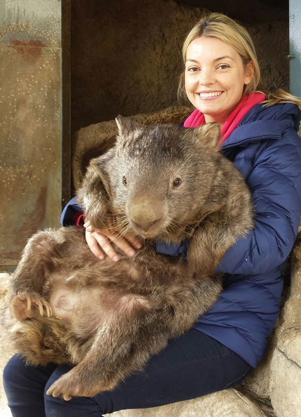 patrick-the-oldest-and-largest-living-wombat-4