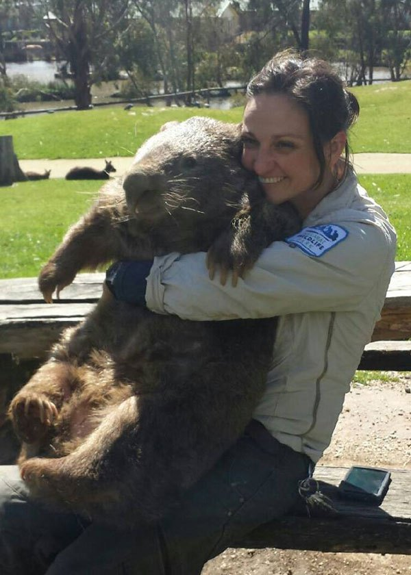 patrick-the-oldest-and-largest-living-wombat-6
