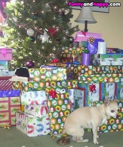 510x510_doggie-handing-out-gifts-under-the-tree