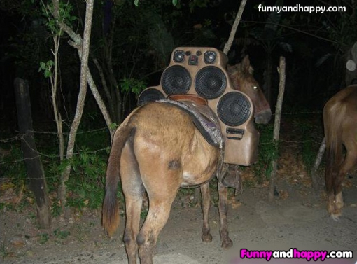 510x510_funny-donkey-on-the-road-with-speakers