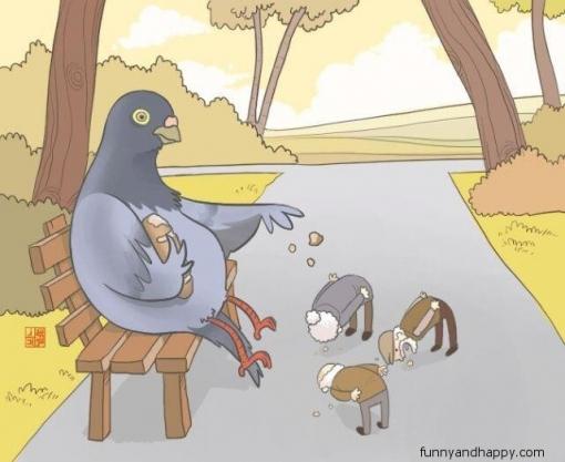 510x510_funny-opposite-feeding-pigeons