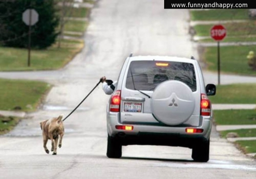 510x510_funny-walking-dog-from-car