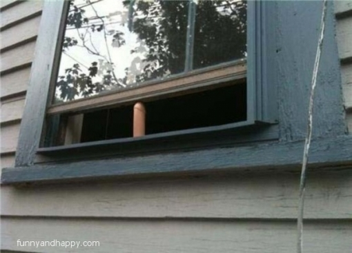 510x510_funny-wedge-in-the-window