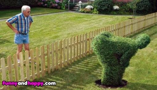 510x510_neighbor-with-a-sense-of-humor