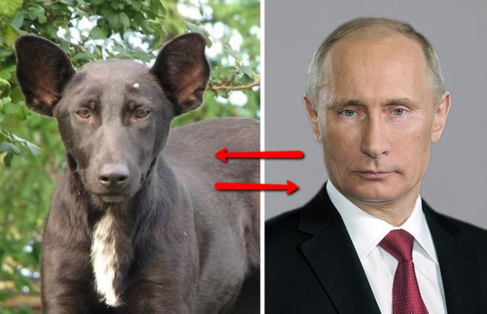 putin_dog