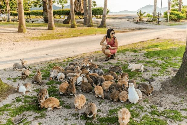 האכלת ארנבים באי הארנב ביפן