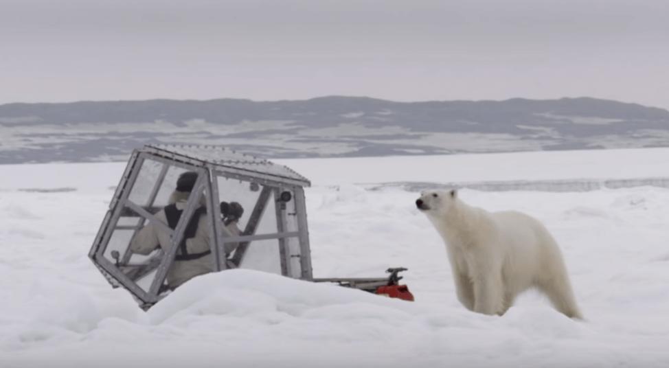 דובה לבנה מתקרבת לחוקר בקוטב הצפוני