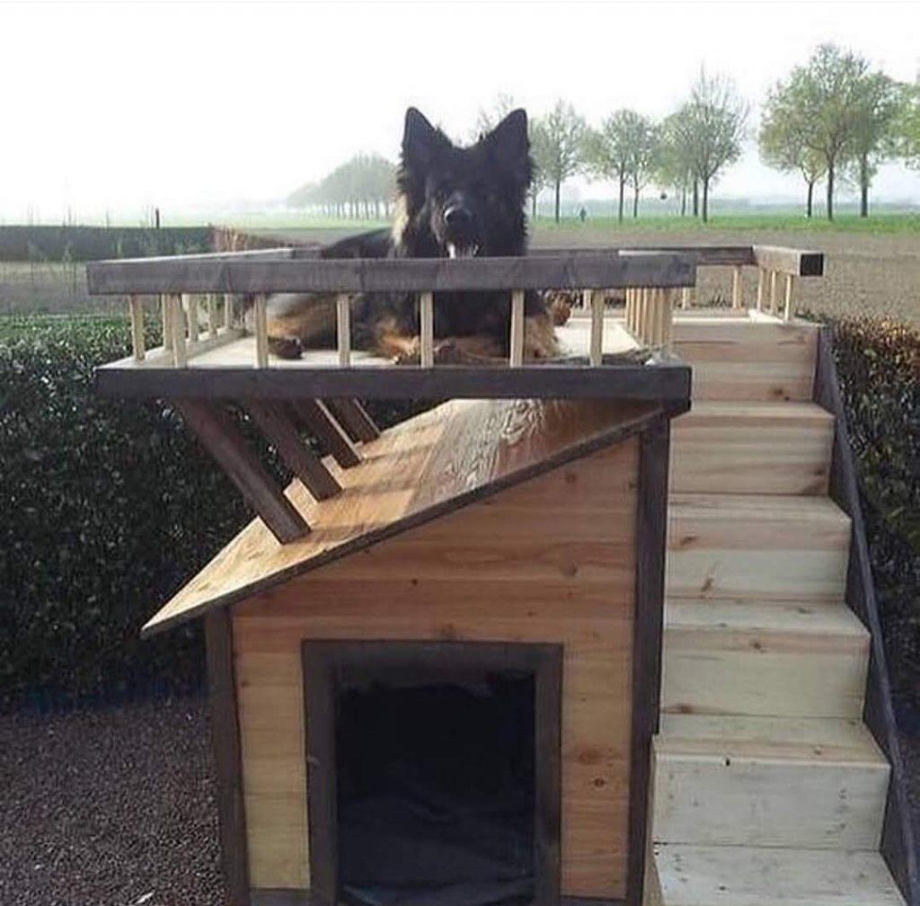 מלונה מעץ לכלב שימירה עם תצפית גג על כל הגינה