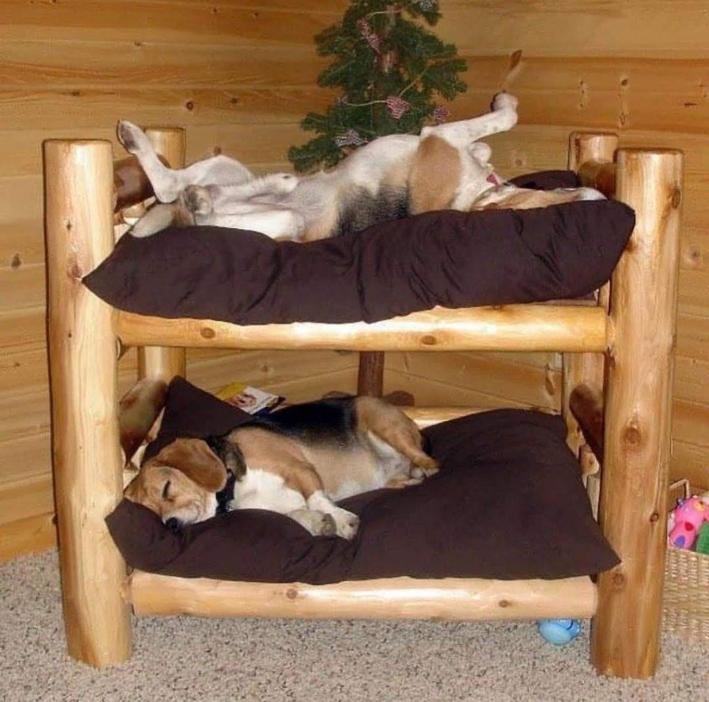 מלונת קומותיים לשני כלבים מעץ