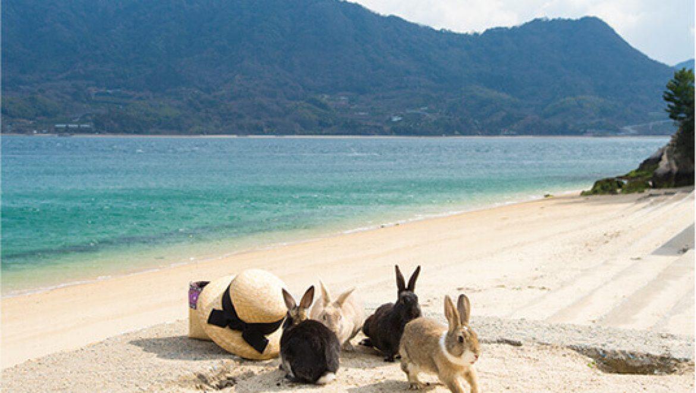 סושי וארנבים – ביקור באי הארנב ביפן