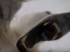 דובה לבנה ורעבה כמעט טורפת חוקר וצלם בקוטב הצפוני – מטורף!