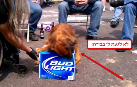 כלב שומר על ארגז בירה של בעליו – זהירות ביס!