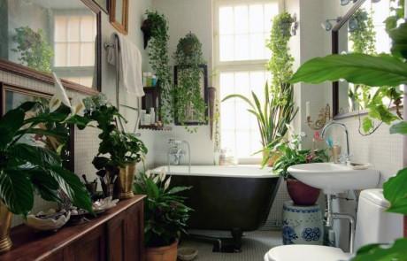5 צמחים נפלאים לשימוש בחדר האמבטיה הירוק שלכם
