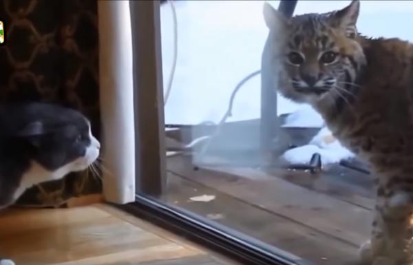 האם חתולים הם אל פחד?