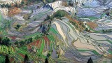 rice-terraces-in-yunnan-china-aerial-from-above