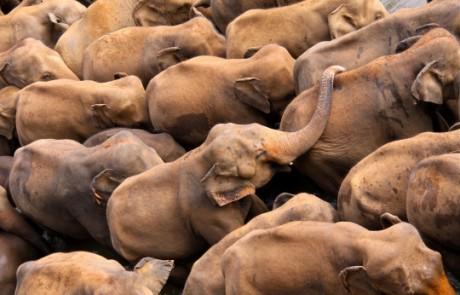 גן פילפילוני – פילים חמודים בסרי לנקה